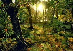 Forest Jigsaw Puzzles