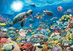 Sea Life Puzzles